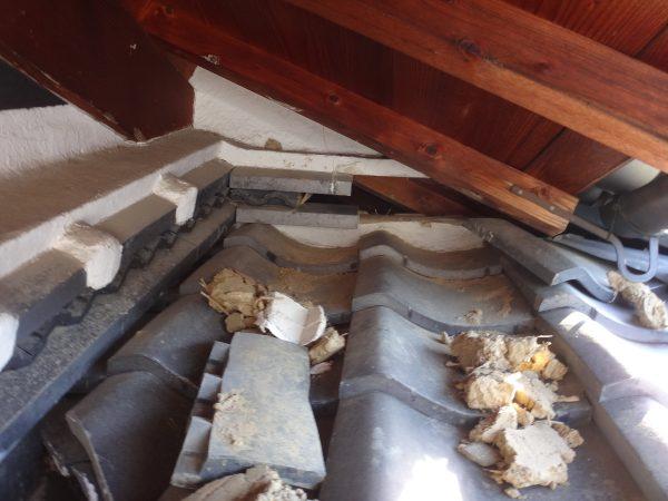 アライグマが屋根瓦を崩してましたサムネイル